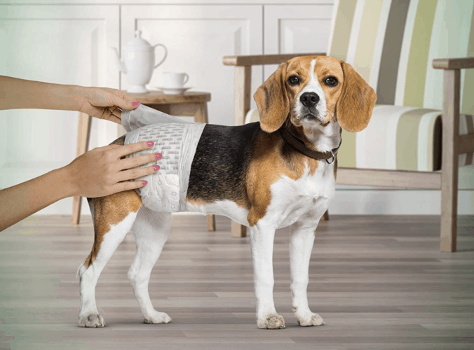 6 Best Dog diapers