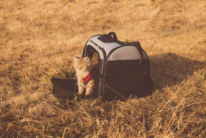 6 Best Pet Carriers
