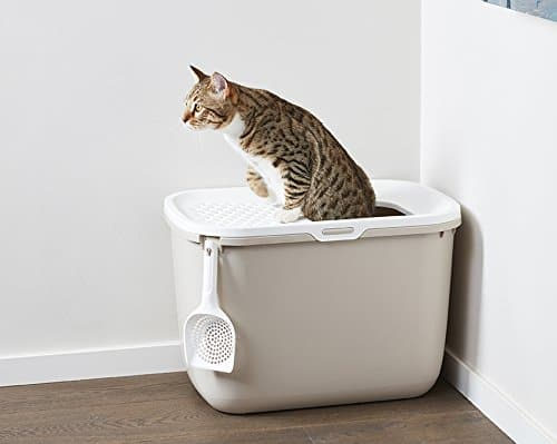 6 best cat litter box