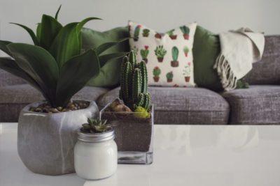 Air Purifier Plants at Home