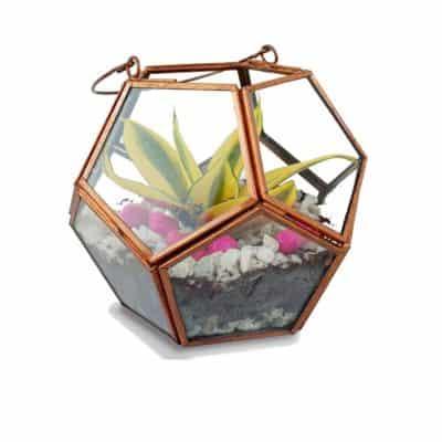 Trust Basket Geometric Terrarium
