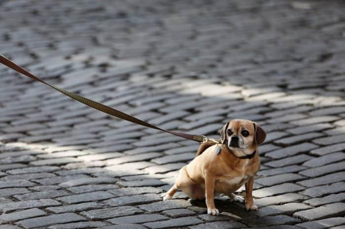 Best 8 Pet Leashes