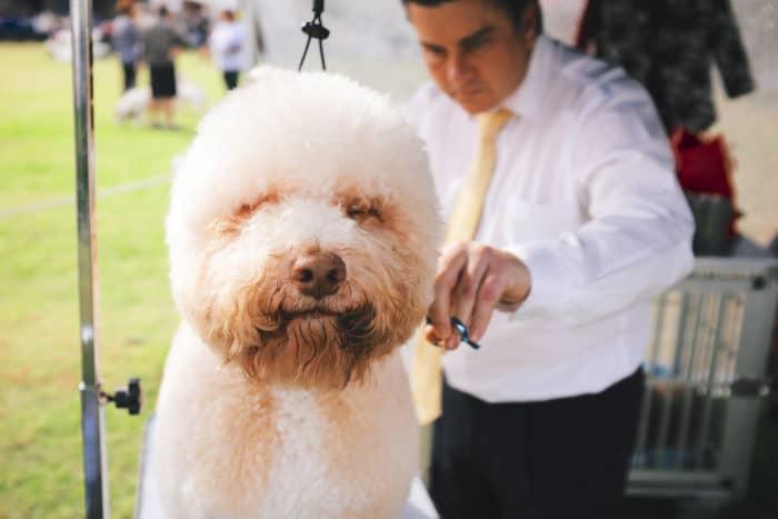Best Dog Hair Trimmer