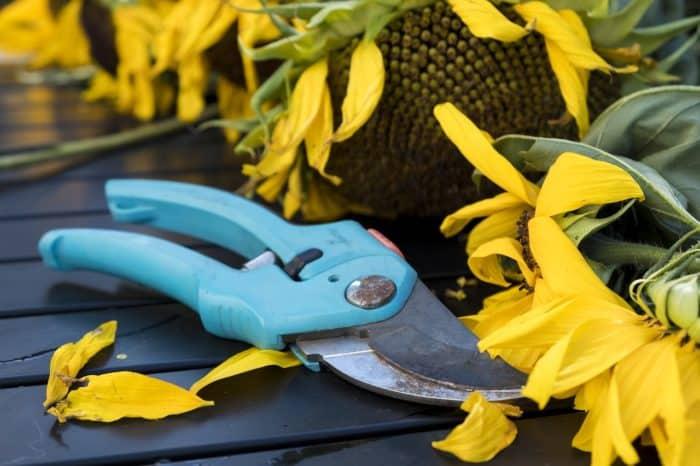 Best Gardening Tools 1