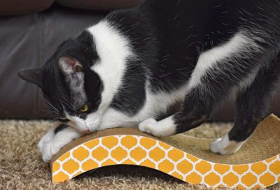 Cat Scratching Board Pad Toy
