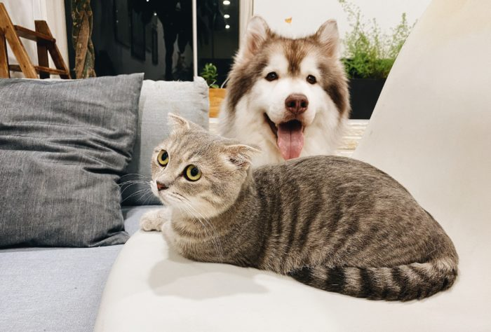 Is Air Cooler Necessary for Your Pets