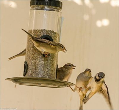 Nature Forever Bird Feeder
