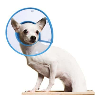 Petbaba Dog Cone Collar In Recovery