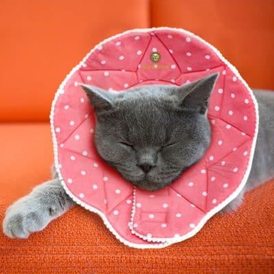 Sungrow Pet Cute Cone
