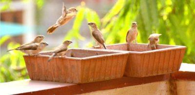 The Himalaya Craft Bird Bath, Earth Brown (9X9-Inch)