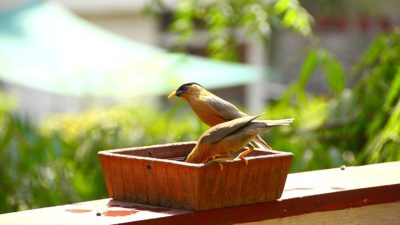 The Himalaya Craft Earthen Bird Bath