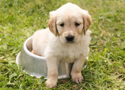Tips for Toilet Train Your Puppy