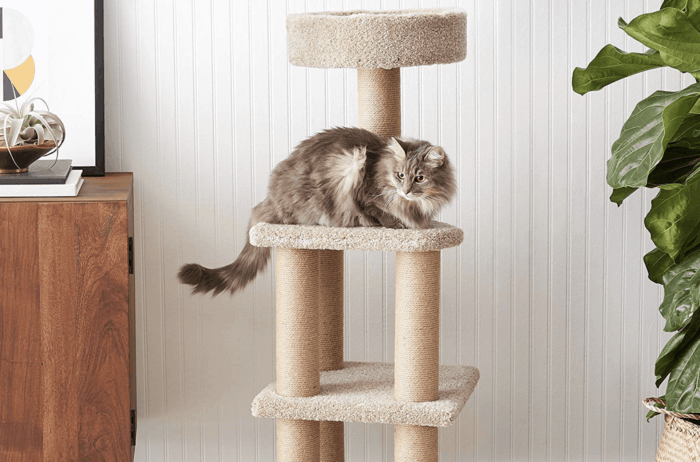 Top 10 Pet Furniture