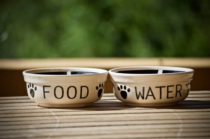 Top 10 Pet feeding products