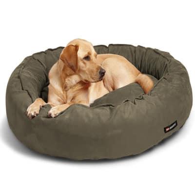 Standard dog bed